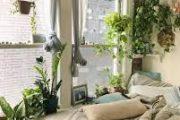 مزایای استفاده از گیاهان در معماری و دکوراسیون خانه